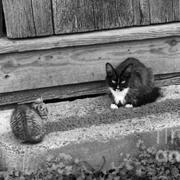 Barn Cats Collection