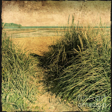 Beach Grass Collection