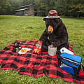Bear Adventures Collection