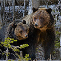 Bears-Stock Images Collection