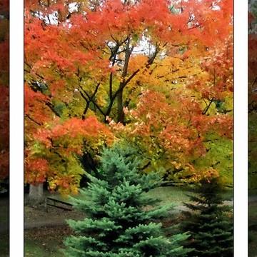 Beautiful Autumn Collection