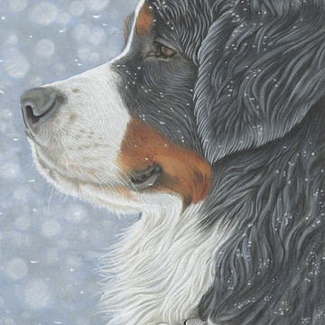 Beautiful Bernese Collection