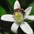 Bees - Beautiful Bees