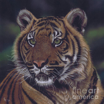 Big Cats Artwork Collection