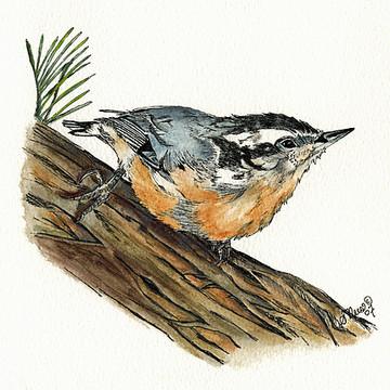 Bird Collection Collection