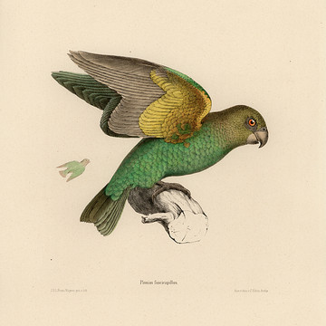 Bird Illustrations Collection