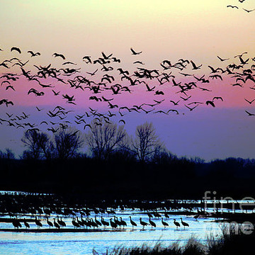 Bird Migrations Collection