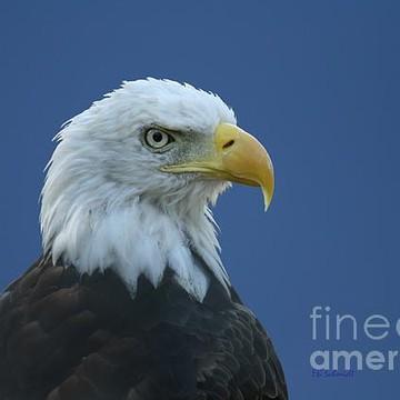 Bird Photographs Collection