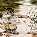 Bird Photography Collection