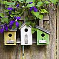 Birdhouses and flowers Collection