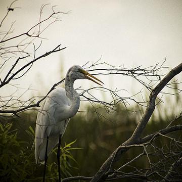 Birds - Photography Collection