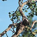 Birds - Robin size Collection