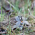 Birds  - Smaller than Robin Collection