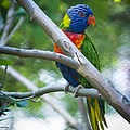 Birds and other Animals Collection
