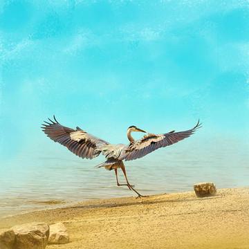 Birds At The Beach Collection
