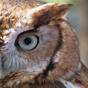 Birds Eye View Collection