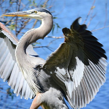 Birds - HERONS Collection