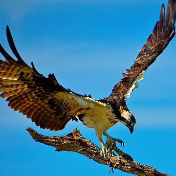 Birds In Flight From Beginning To Ending