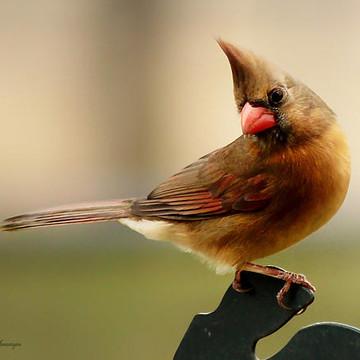 Birds  Collection