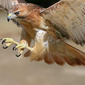 Birds of Prey Collection