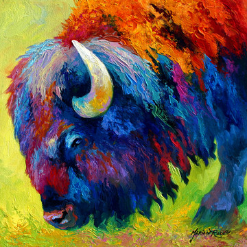 Bison Collection Collection
