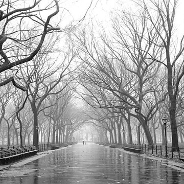Black and White Central Park Collection