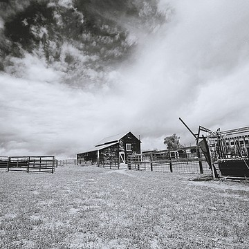 Black and White Western Art Collection