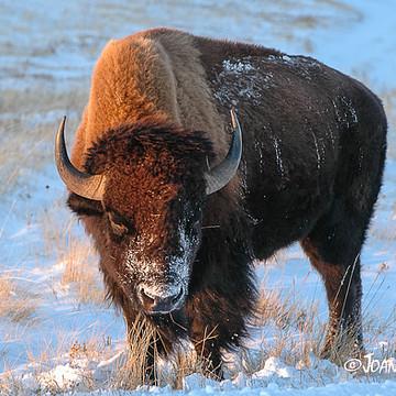 Black Hills of South Dakota Collection