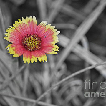 Black White with a touch of Color Photography Collection