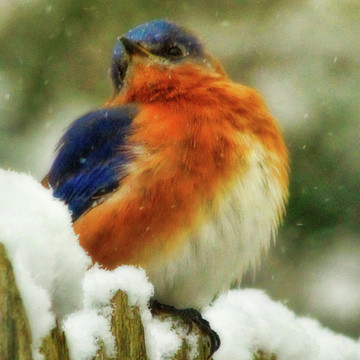 Blue Birds Collection