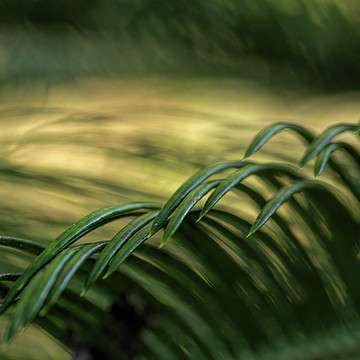 Bokeh Abstracts in Nature Collection