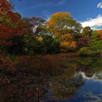 Boston Arnold Arboretum Collection