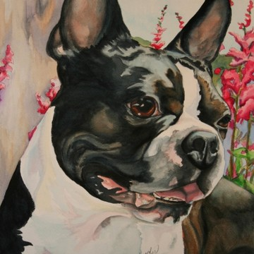 Boston Terrier Exclusive Collection