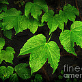 Botanical - Floral