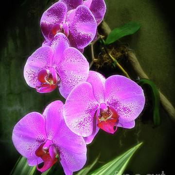 Botanical Gardens Collection