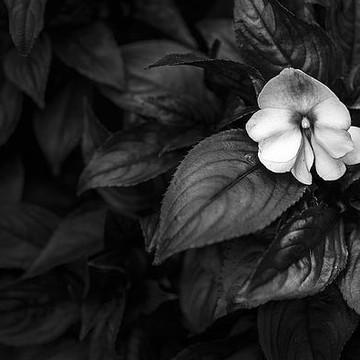 Botanical Photographs Collection