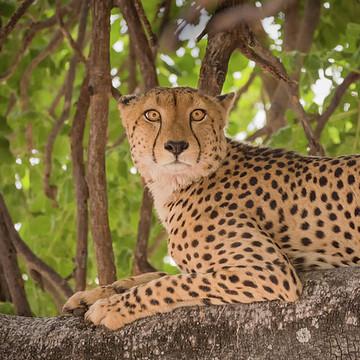 Botswana Africa Collection