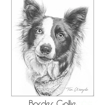 Breed Poster Pencil Drawing Style Collection