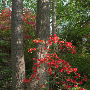 Brookside Gardens Collection