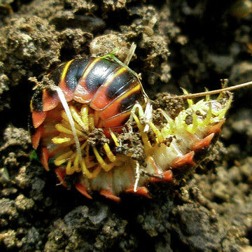 Bugs - Insects and Arthropods Collection