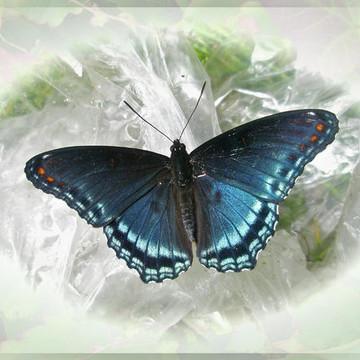 Butterflies - Moths - Caterpillars Collection