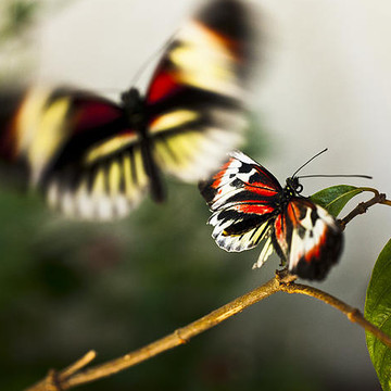 Butterflies - Photography Collection
