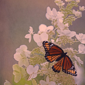 Butterflies and Insects Collection