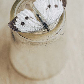 Butterflies and Moth Collection