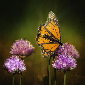 Butterflies and Moths Collection
