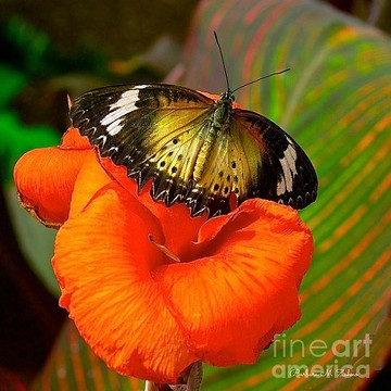 Butterflies From Around The World Collection