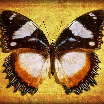 Butterflies - Leda Collection