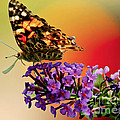 Butterfly Fine Art Collection