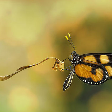 Butterflys and Dragon Flies Collection