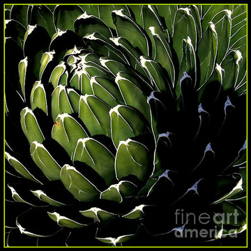 Cacti Abstract Photography Collection
